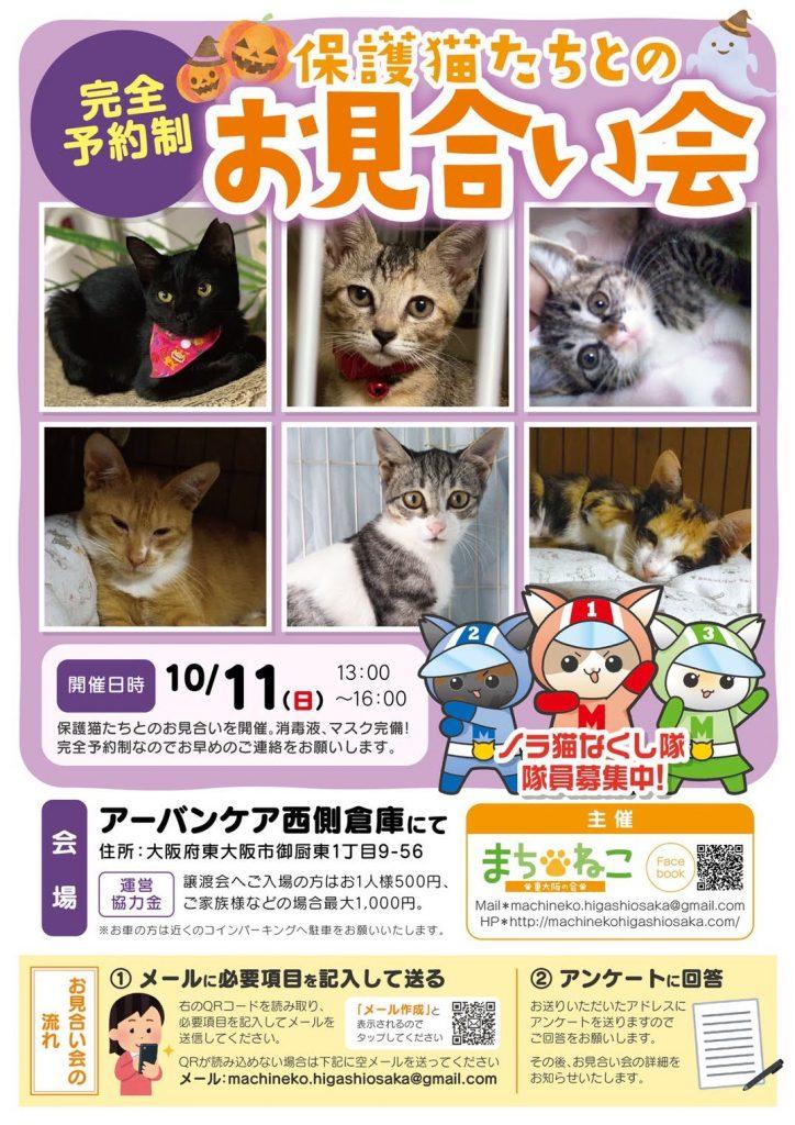 【10月11日】完全予約制!保護猫たちとのお見合い会終了しました。
