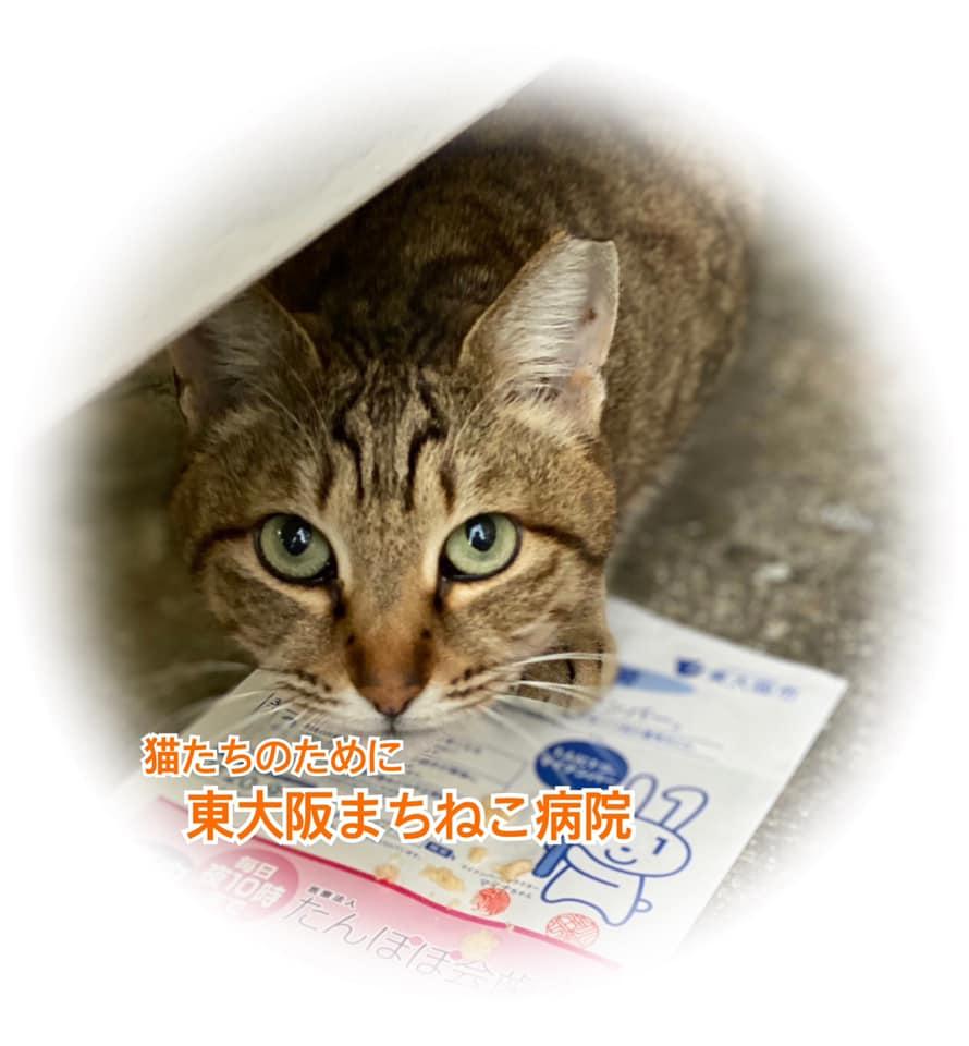 お知らせ 東大阪まちねこ病院