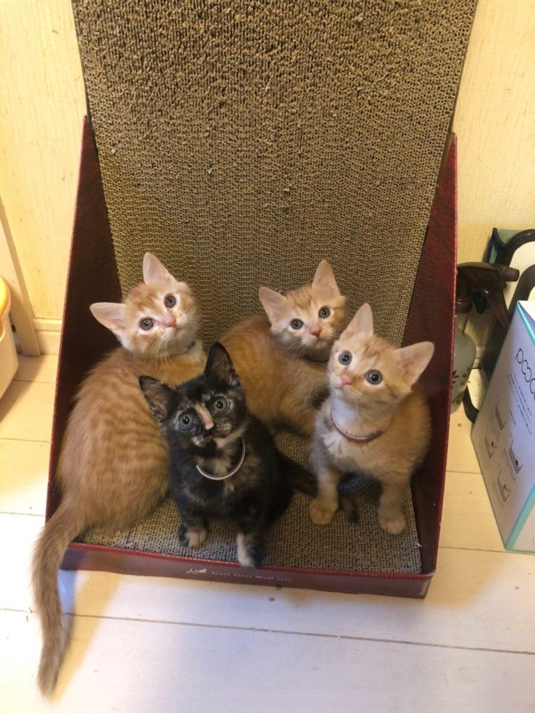 完全予約制お見合い会参加子猫