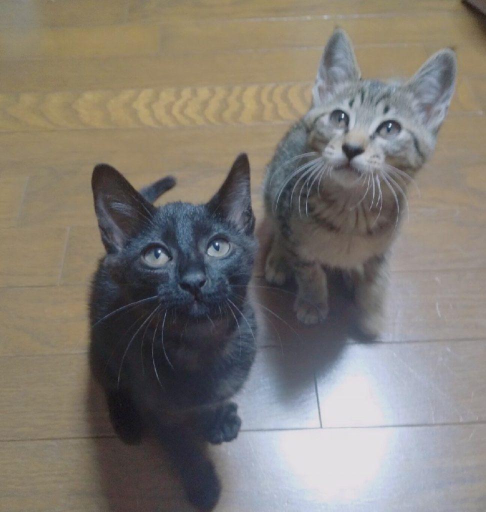 ブラックスモークな黒子猫♀