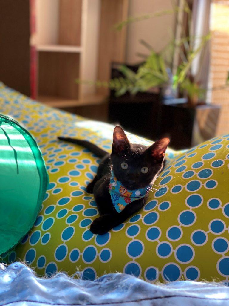 やんちゃ黒子猫