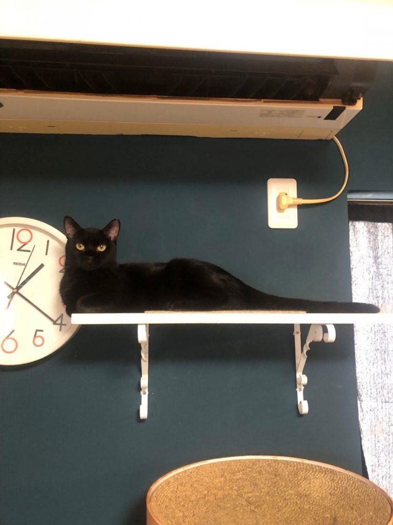 美黒猫1歳♀